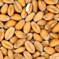 приготовление арахисовой пасты с помощью блендера